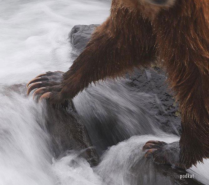 Голодная Самка Попала В Берлогу К Медведям