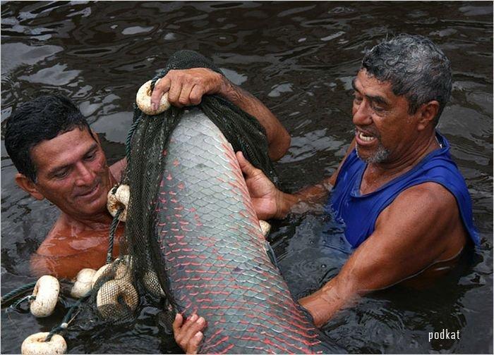 Рыбалка - опасное занятие