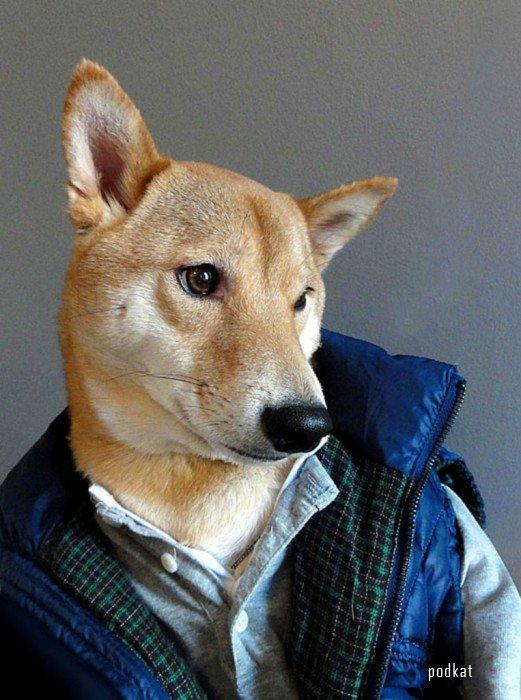 Советы по мужскому стилю от пса Бодхи